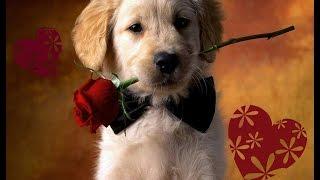 10 признаков того, что собака вас любит. Как узнать?