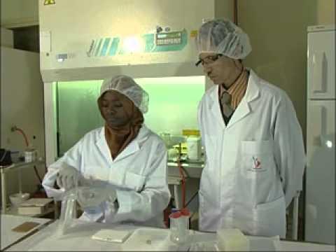 Bacteria analysis PCR Achbani El Hassan