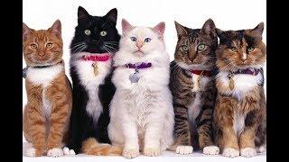 Кошки-такие разные... очередной сборник-коротких роликов о кошках.
