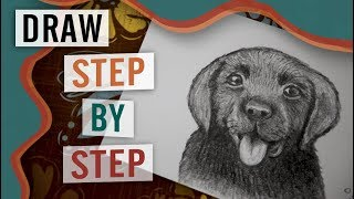 How to Draw a Dog Step by Step - Video Tutorial
