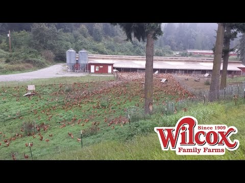Wilcox Farms Tour 2015