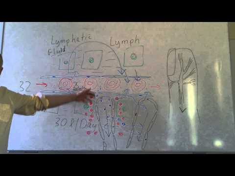 Lymphatics lesson 1, Tissue fluid and afferent lymphatic vessels