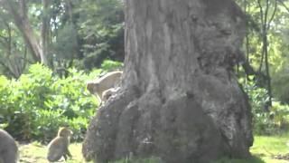 Monkey Forest Thumbnail