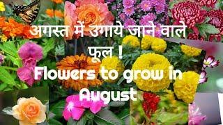 152# अगस्त में उगाये जाने वाले फूल ! (IN HINDI)