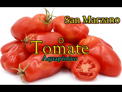 san marzano o tomate aquap nico aquaponics youtube. Black Bedroom Furniture Sets. Home Design Ideas