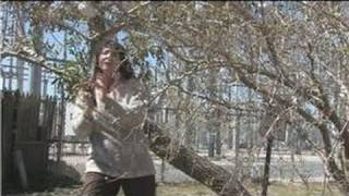 Fruit Trees : How to Prune Weeping Mulberry Trees