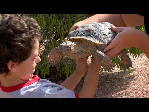 Desert Tortoise Adoption