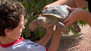 Desert Tortoise Adoption