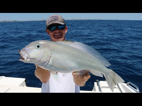 Eating A Fish That Could Poison Me... Catch, Clean And Cook- Blueline (Grey) Tilefish