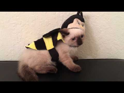 Kittens in Costumes!! Seven Week Old Baby Bees!