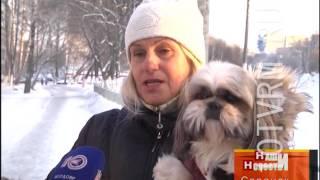 В Саранске коммунальщики расстреливали собак на глазах у прохожих