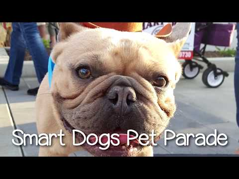 Crazy Dogs Surf Doggy Parade and WINS! | Smart Dog Academy