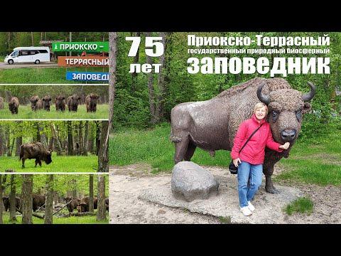 Путешествие на КОТоДоме, часть 3: Приокско-Террасный государственный природный биосферный заповедник