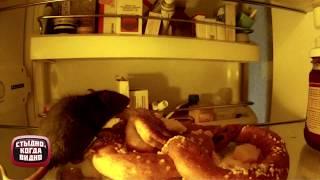 Мышь в холодильнике. Стыдно, когда видно
