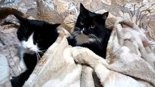 Кот и кошка  От нежности до драки один миг