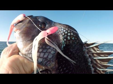 2 Day Party Boat Fishing + Eating 3 Species Of Fish NJ/NY