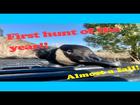 Goose Hunt {Almost a Fail} {CATCH, CLEAN}!!!!{GRAPHIC}