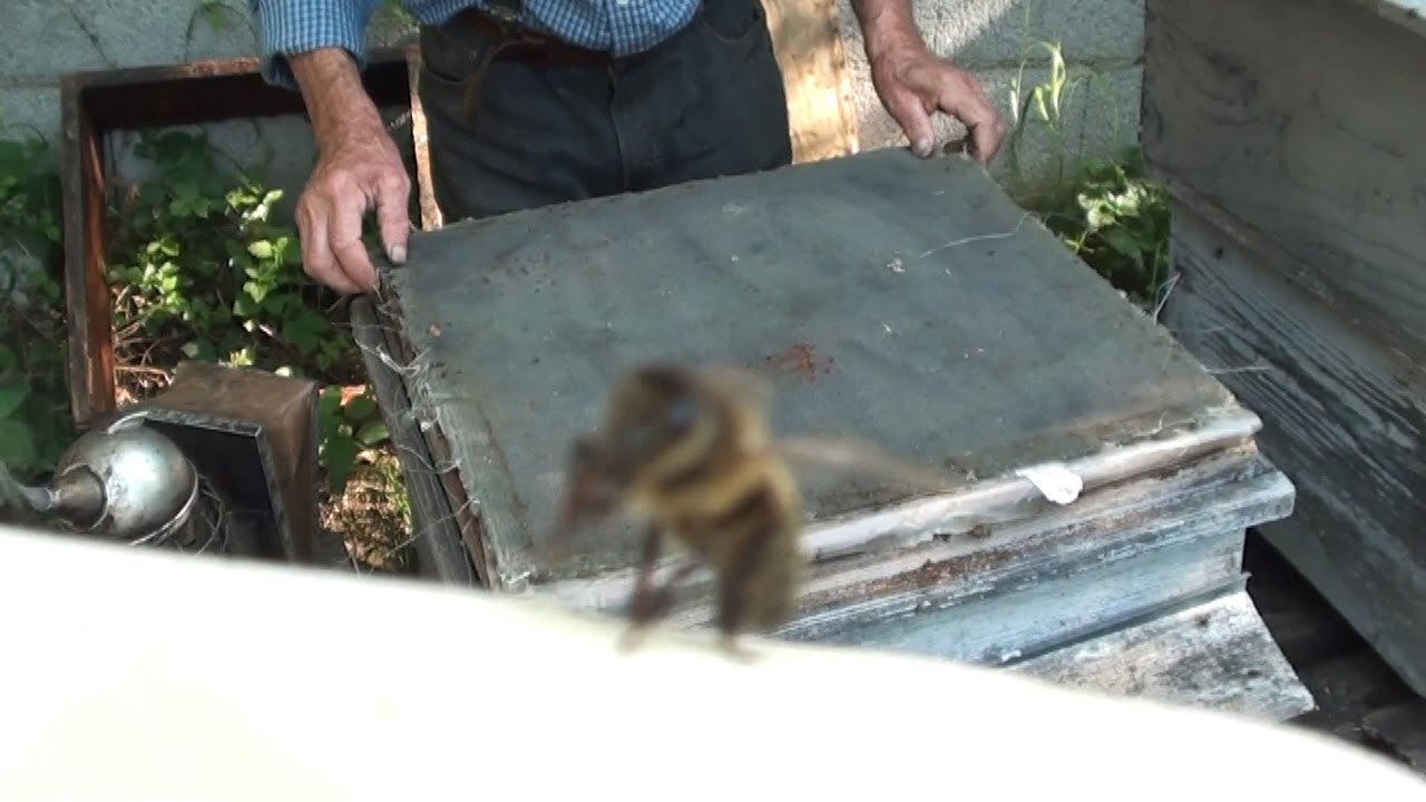 reportage comment les abeilles fabriquent le miel youtube. Black Bedroom Furniture Sets. Home Design Ideas