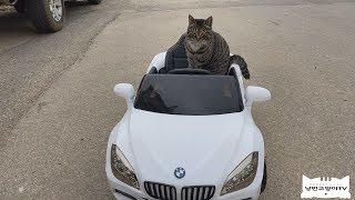 타는 것을 좋아하는 고양이에게 BMW를 선물로 보내주셨…