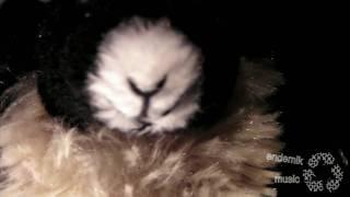 The Goat vs. The Panda Part I [Prinzenallee Promo Video]