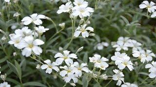 видео Укромные уголки сада