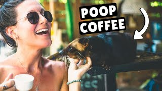 POOP COFFEE & RICE TERRACES | Last Day in Ubud, Bali, Indonesia