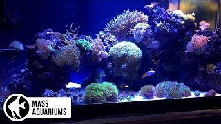 how to coral placement tips to get your corals in the right spot get your polyps poppin