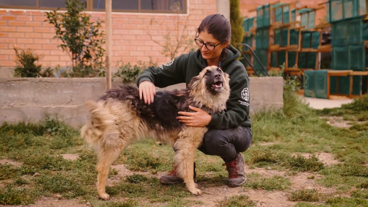 Dog and Cat Welfare - Humane Society International