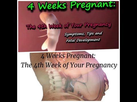 dating ultrasound 4 weeks