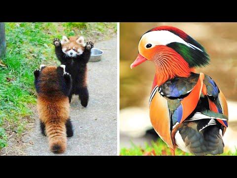 5 Самых милых и красивых животных в мире - Видео онлайн