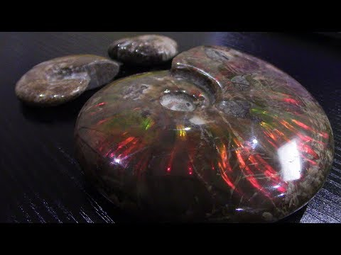 65 Million Years Old Iridescent Ammonite Ammolite Opalized Specimen Fossil Madagascar