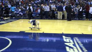 Jack The Bulldog's New Skateboard Trick!