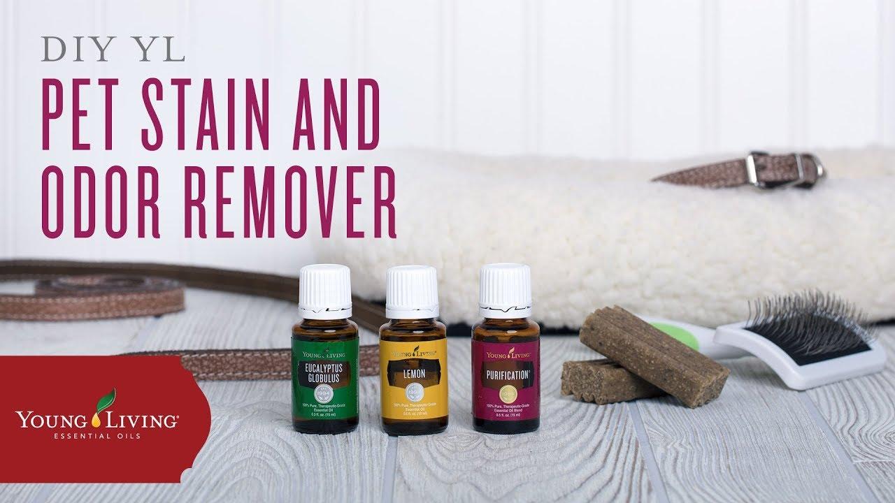 Diy Pet Odor Deodorizer With Young Living Essential Oils You
