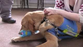 Guide Dogs St Andrews And Some Puppy Therapy