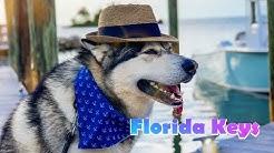 Florida Keys Pet Friendly Banana Bay Resort | Sombrero Beach