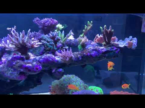 Update Meines Red Sea Peninsula 650 - Aqua Medic PH-Monitor Und Aqua Medic Ecodrift 15.2