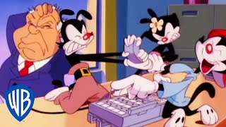 Animaniacs | The Warners Become Secretaries | Classic Cartoon | WB Kids