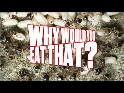 escamoles-aka-fried-ant-larvae---why-would-you-eat-that?