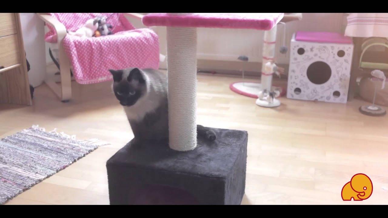 Junior mačička videá