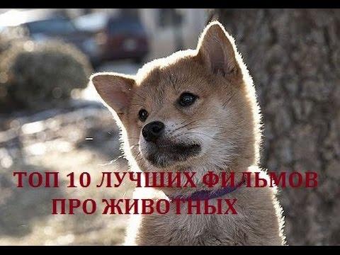 Самые лучшие фильмы про собак ⋆ КиноПодборки