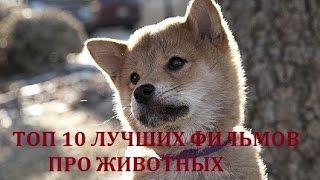 ТОП 10 ЛУЧШИХ ФИЛЬМОВ ПРО ЖИВОТНЫХ