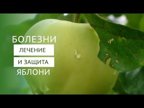 Болезни яблонь и борьба с вредителями плодовых деревьев