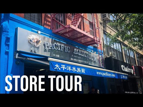 Pacific Aquarium Tour - New York City