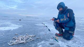 СВЕРШИЛОСЬ Открытие сезона 2021 по ловле корюшки Рыбалка на корюшку на Финском заливе