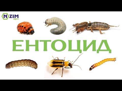 Ентоцид (Метаризин) ґрунтовий інсектицид. Склад, інструкція застосування.