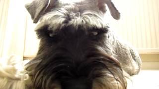 Dog funny Face