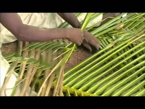 Weaving Coconut Fronds- Ghana's Natural Beauty!