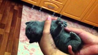Котенок плавает во сне