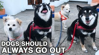 TAKE YOUR DOGS OUT! | WahlieTV EP559