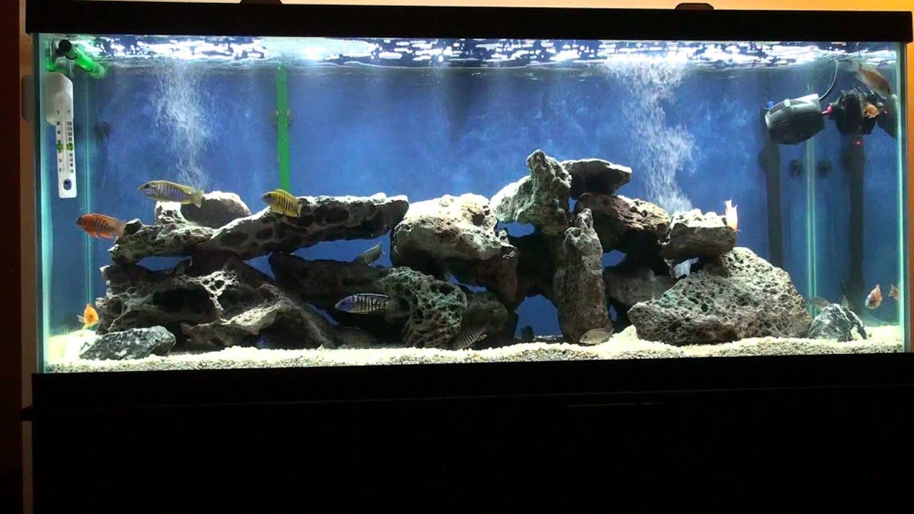 75 gallon cichlid aquarium Malawi Peacocks cichlid & Haps ...